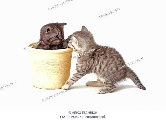 junge katzen