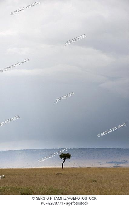 A rainstorm approaching in the Masai Mara plains, Kenya