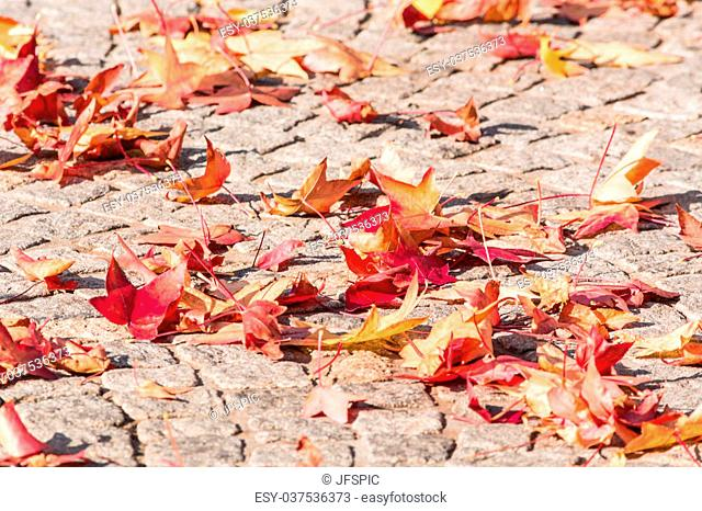 Various autumn leaves lying on a pavement stone