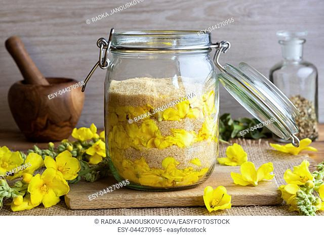A jar filled with fresh denseflower mullein flowers and cane sugar, to prepare homemade herbal syrup against cough