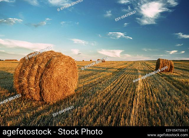 Rural Landscape Field Meadow With Hay Bales During Sunny Evening In Late Summer