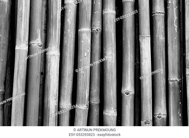 Dried bamboo pole texture background. Grey background for death, sad, peaceful, tranquil. Asian style bamboo fence design