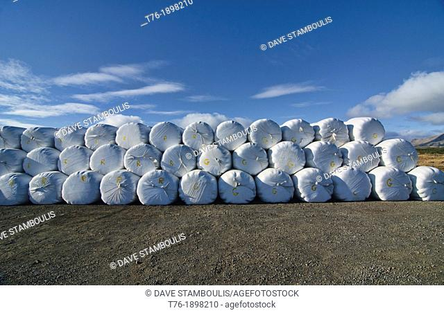 rolled straw bales along the road in northern Iceland