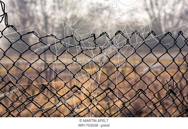 Spider web in front of chainlink fence
