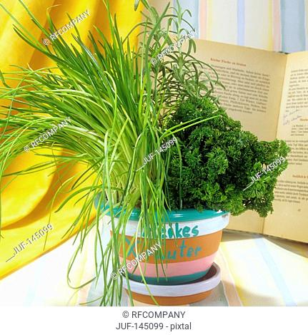flowerpot with different herbs