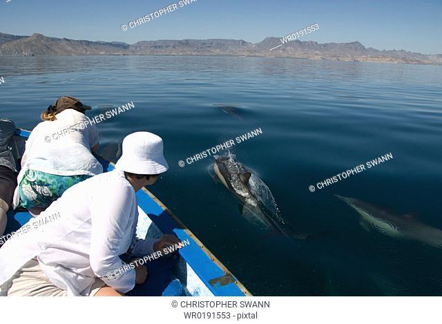 Common Dolphins Baja, Mexico