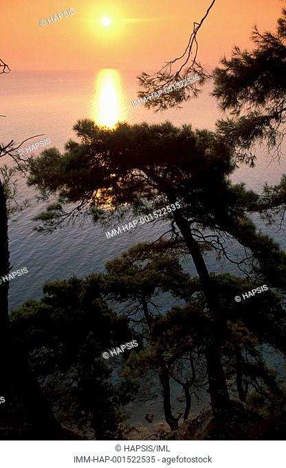 Kassandra Peninsula, Kallithea, trees, sunset, Halkidiki, Macedonia Central, Greece