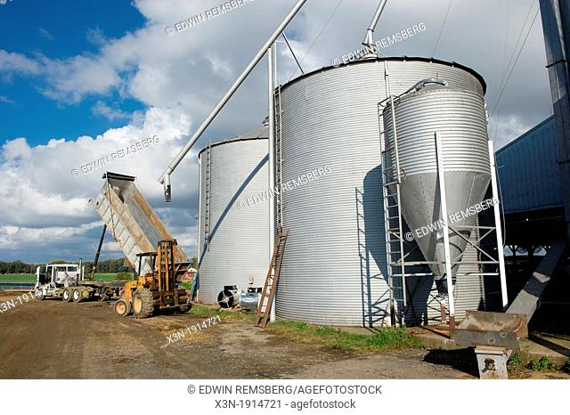 Grain being unloaded from storage in grain silos on a farm, Chestertown Maryland USA