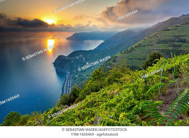 Sunset over Corniglia, Cinque Terre National Park, Province of La Spezia, Liguria, Italy, Europe
