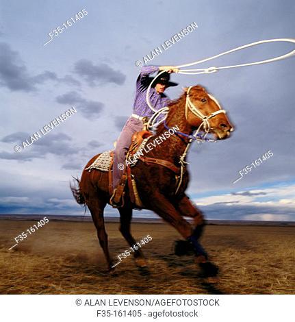 Teenage girl rodeo champion roping on horseback. Colorado. USA