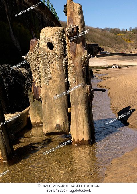 old wooden pilings on the beach at Sandsend,Yorkshire,UK