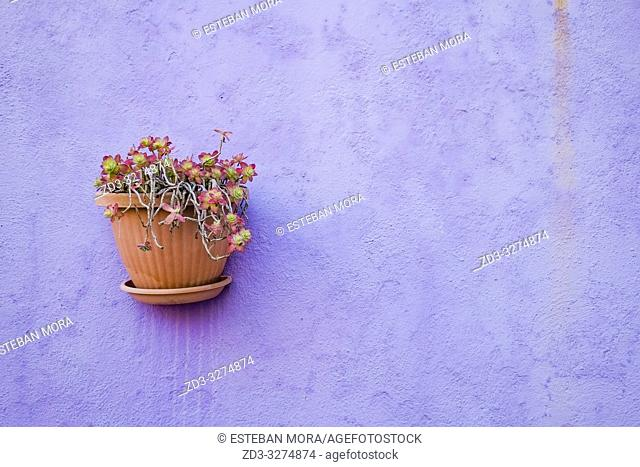 Flower pots on a purple wall. Burano island, Venice, Italy