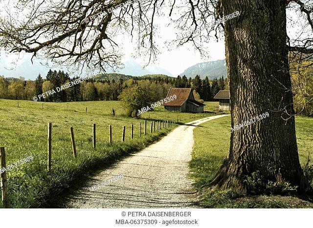 way beside an oak leads to hut