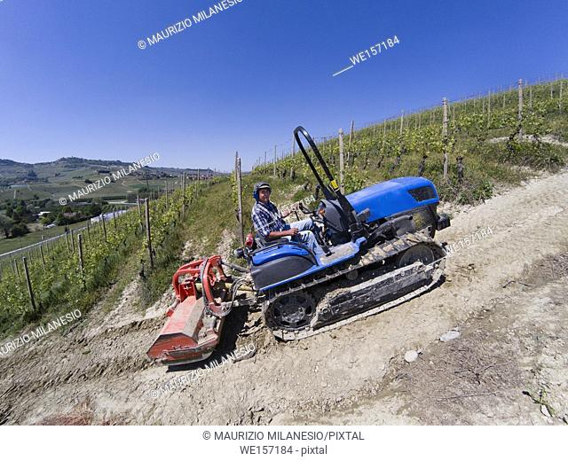 Driving on a crawler tractor, climbs steeply up the Langhe hills in Piedmont Italy among the rows of vineyards