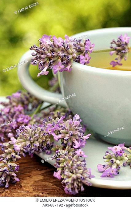 Lavender infusion (Lavandula officinalis)