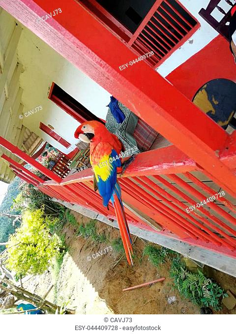 Guacamaya tricolor parte y s?mbolo de la cultura colombiana