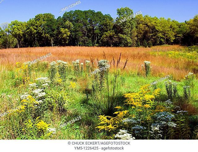 Illinois Prairie Land