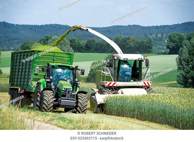 forage when harvesting whole crop silage