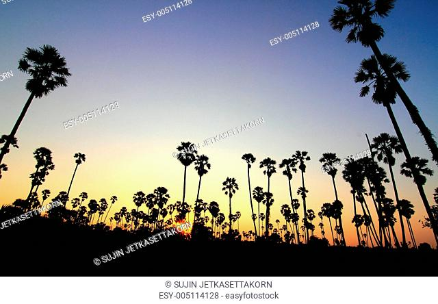 Silhouette palm trees at sunset