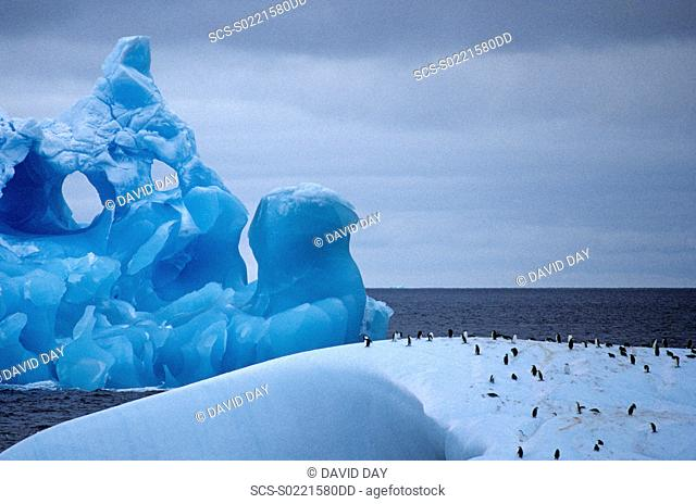 Close white iceberg with penguins on top, and eroded blue iceberg behind Nearing Antarctic Peninsula, Antarctica