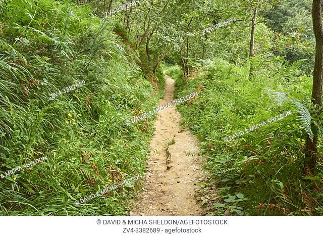 Walking path going through the forest to Donostia San Sebastian at the Camino del Norte, coastal path, Way of St. James, Camino de Santiago trail