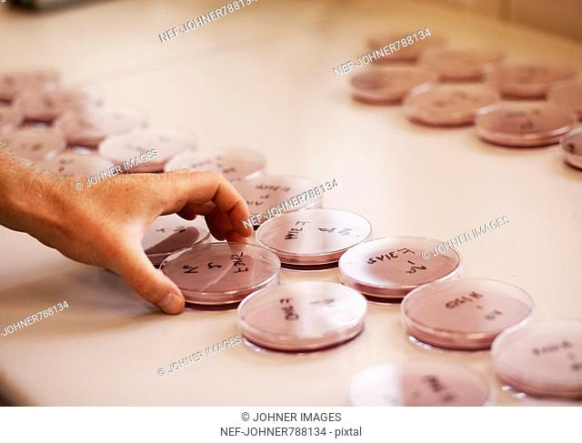 Petri dishes on a table, Sweden