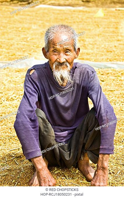 Close-up of a senior man crouching over rice grain, Zhigou, Shandong Province, China