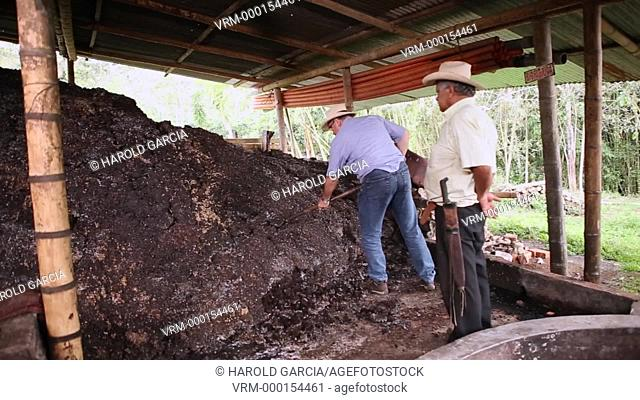 Handling the pulp of coffee, constitutes the environmental action more important in the benefit of the land, given that at this stage it generates the most...