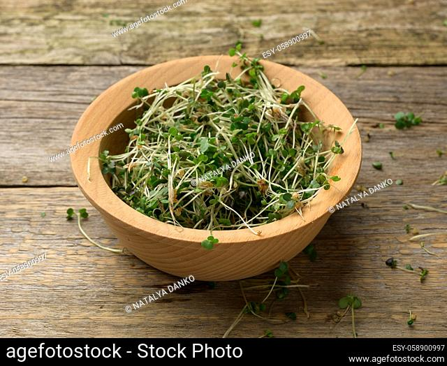 green sprouts of chia, arugula and mustard on a table from gray wooden boards, top view. A healthy food supplement containing vitamins C, E and K