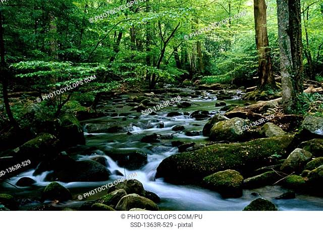 Stream flowing in a forest, Tennessee, USA