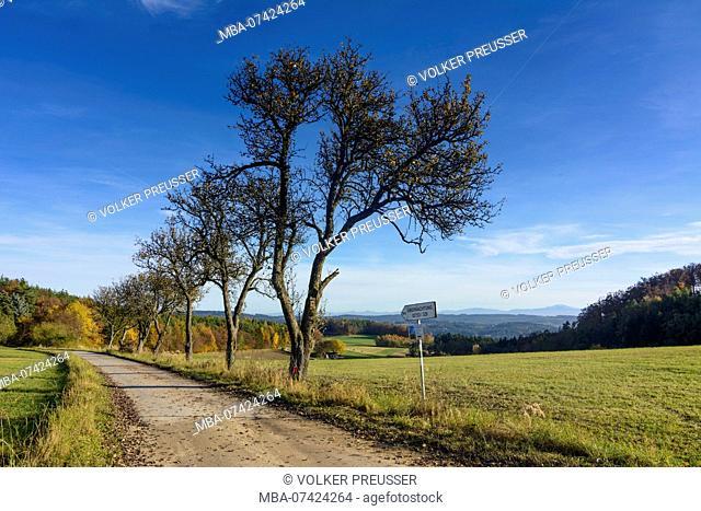 Bergern im Dunkelsteinerwald, forest Dunkelsteinerwald, Wachau, Lower Austria, Austria