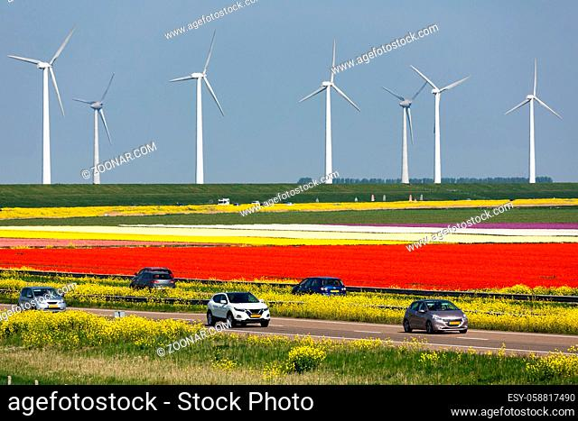 Dutch motorway between lelystad and Emmeloord along colorful tulipfields and wind turbines