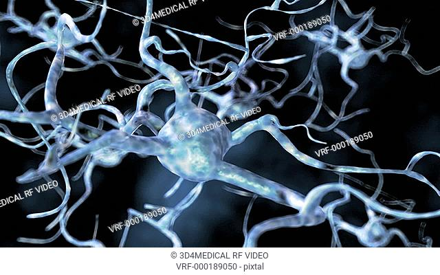 The camera zooms in on a group of neurons passing close to the nerve cell body of another neuron