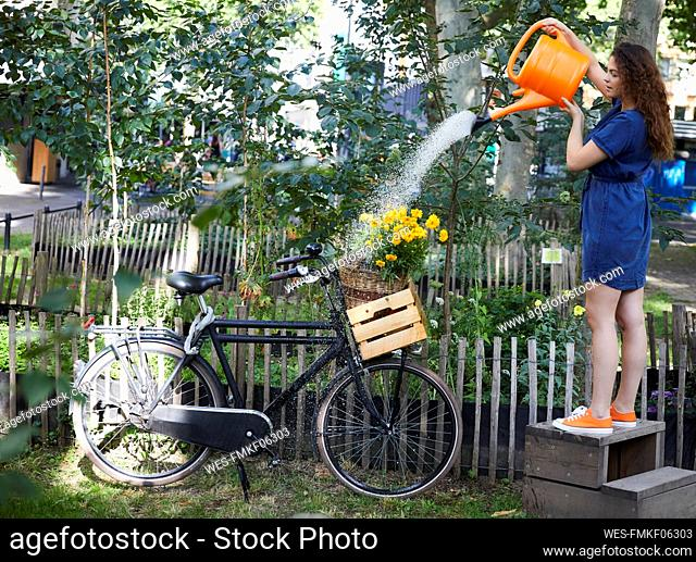 Young woman watering flowers in wooden box and bicycle in garden