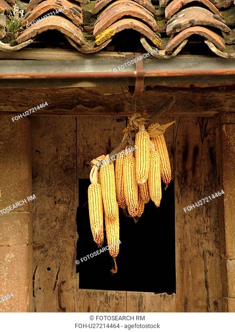 France, Ozenay, Burgundy, Saone et Loire, Europe, Maconnais Wine Region, dried corn cobs hanging from side of old barn with old tile roof