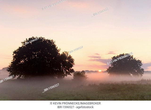 Sunrise over the Elbe meadows, Biosphaerenreservat Mittlere Elbe biosphere reserve in Dessau, Saxony-Anhalt, Germany, Europe