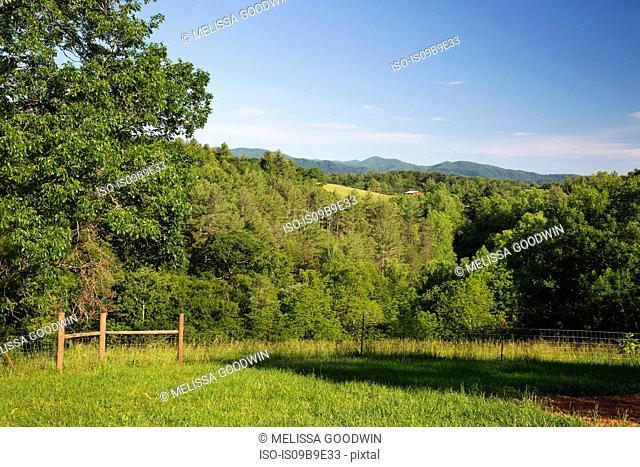 Field landscape of free range organic farm