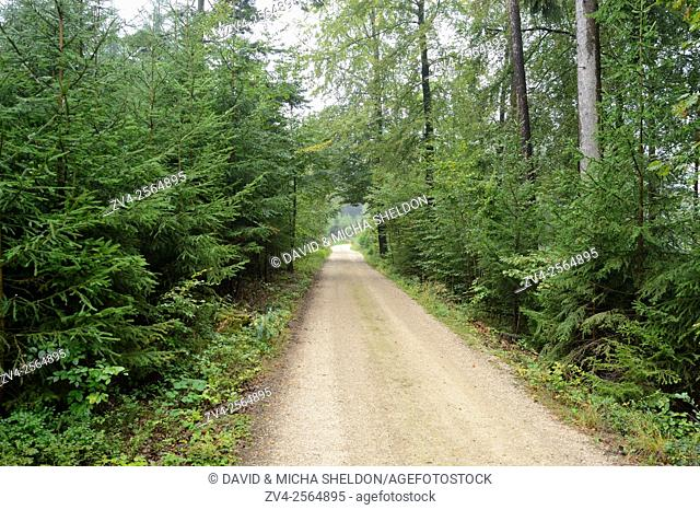 Landscape of a little taril going through a Norway spruce (Picea abies) forest in summer