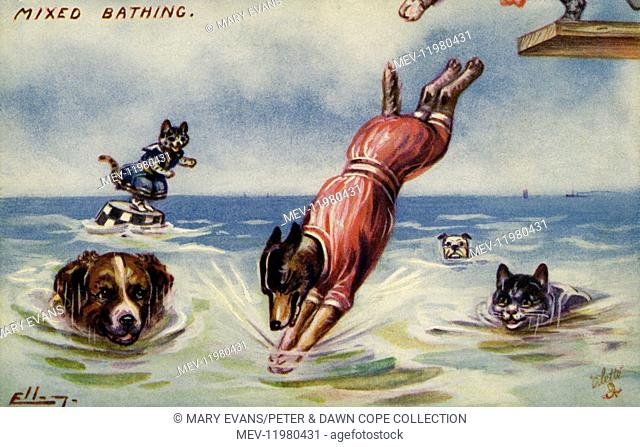 Cats and dogs in swimsuits frolicking in the sea watch a dog dive in