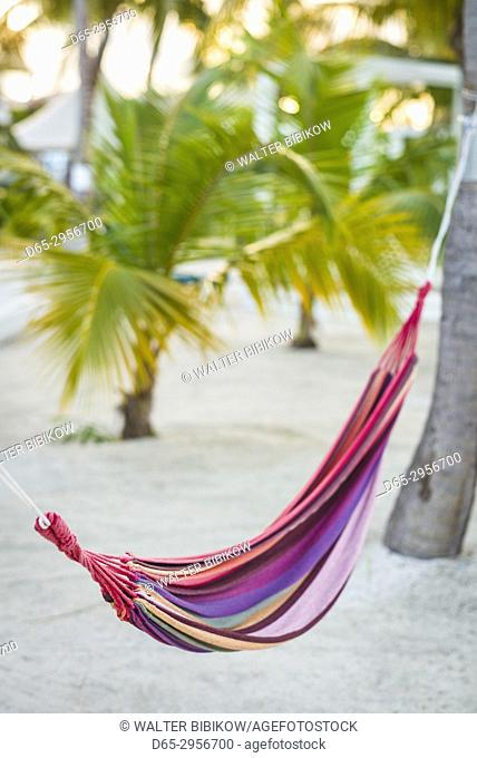 French West Indies, St-Martin, Baie Nettle, hammock and palms