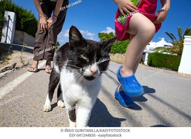 portrait of face white and black cat walking on the street with little girl and woman legs
