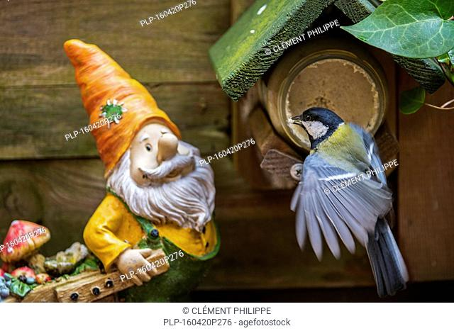 Garden gnome and great tit (Parus major) feeding on peanut butter from bird feeder