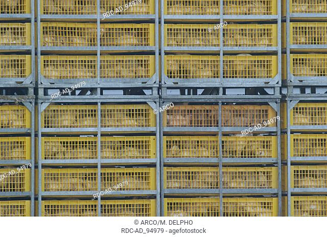 Chickens in cages Hessen Germany