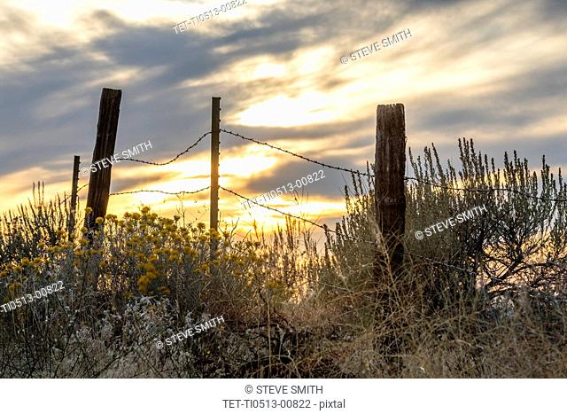 Sagebrush and barbed wire fence at Boise Foothills in Boise, Idaho, USA