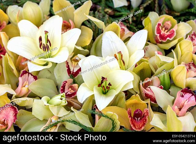 floral composition with orchid and lily flowers