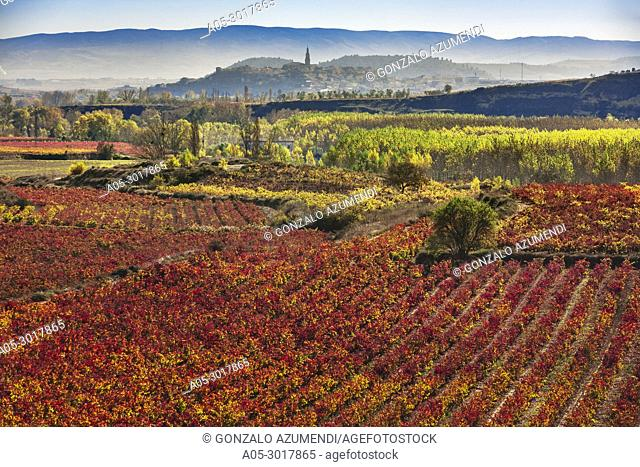 Vineyards in autum around Labastida in Rioja alavesa. In the background Briones village. La Rioja. Spain