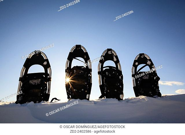 Snowshoes stuck in snow. Dovrefjell-Sunndalsfjella National Park. Norway