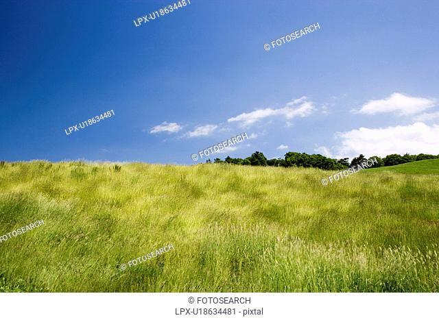 Grass field, Yamagata Prefecture, Honshu, Japan