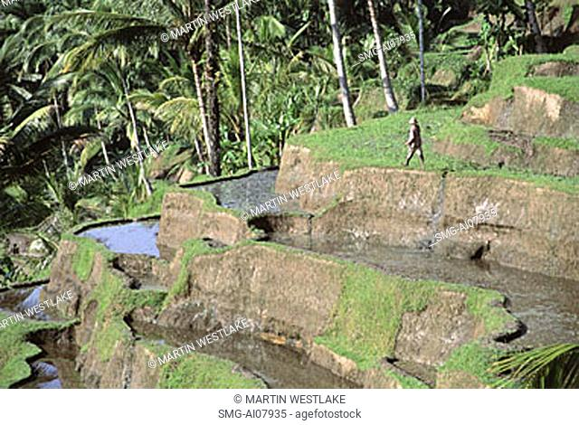 Indonesia, Bali, Ubud, Tegallalang, rice terraces before planting. (grainy)