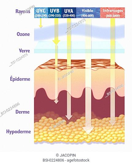 Solar radiation. Scheme showing the depth of penetration of certain solar rays in the skin